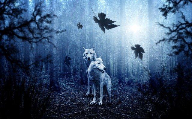 Notte oscura dell'anima