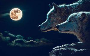 storia dei due lupi
